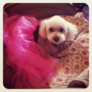princess Pip